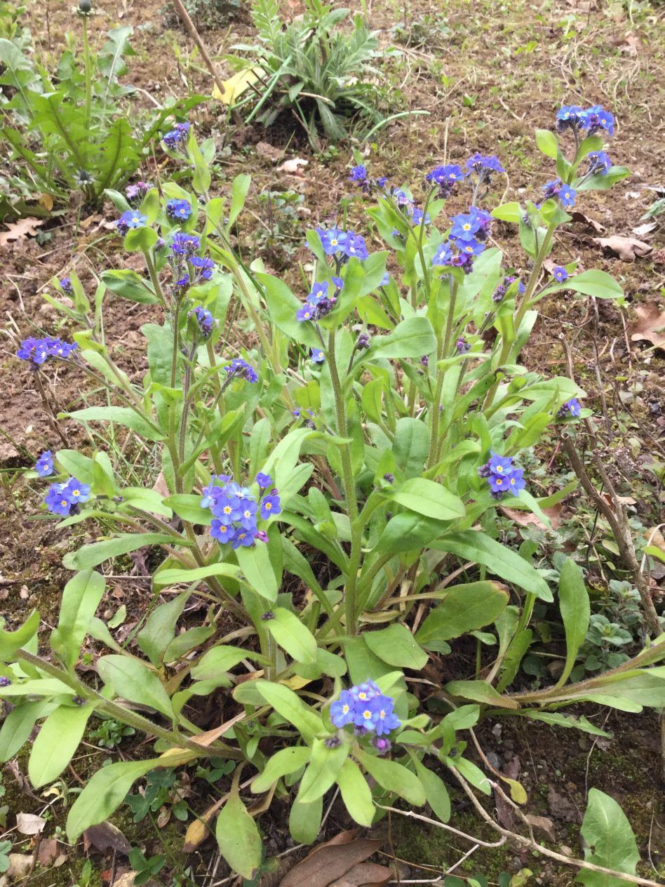 Carrick-on-Suir Library: Spring In The Wildflower Garden