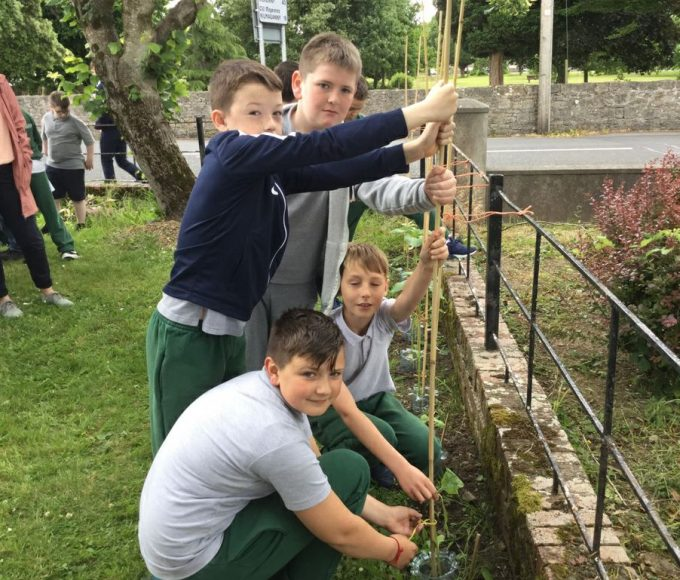 Carrick Library's Pollination Project