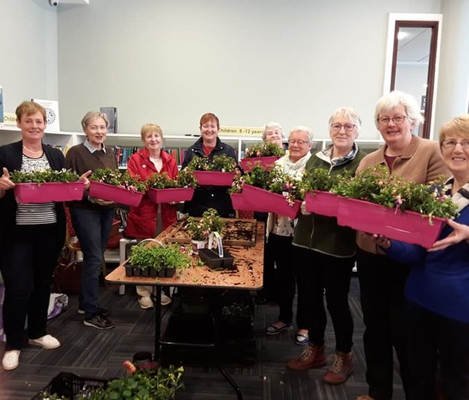 Window Box Tips At Tipperary Town Library